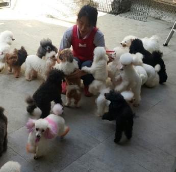 狗狗露天散步廣場_1
