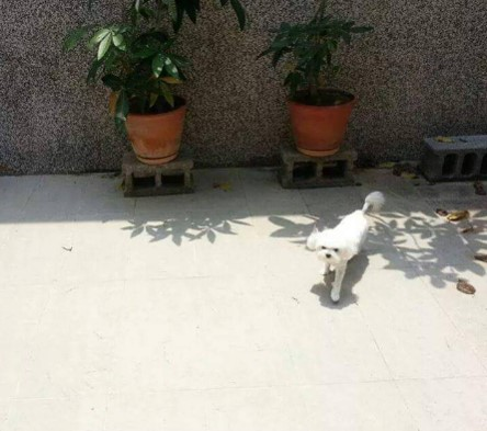 狗狗露天散步廣場_2
