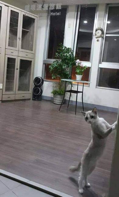 貓咪散步廣場_3