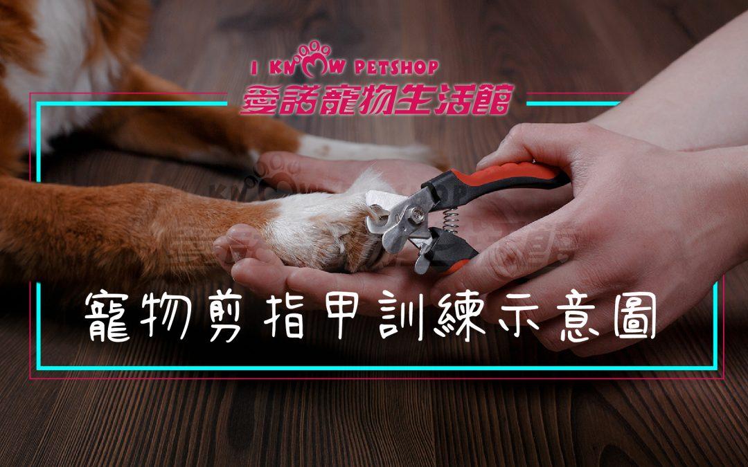 毛小孩居家寵物美容DIY-寵物指甲